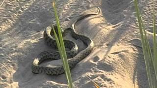 видео: змеи на пляже каролино бугаз одесская область