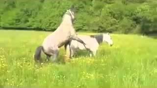 Если бя имел коня или конь имел меня