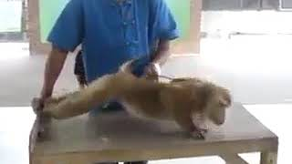 Very funny videos