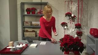 Dekorationsideen für den Fachhandel: große Raumobjekte mit Weihnachtssternen