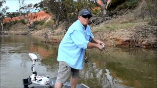 How to catch Yellow Belly - SHIMANO FISHING