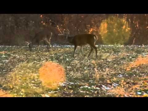 Meeghan's Pike County Whitetail Deer Hunt - Eagle Lakes Outfitters