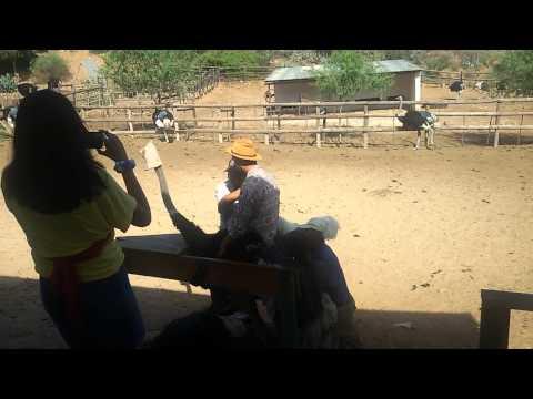 South Africa Ostrich Farm Ride Shivam Goel
