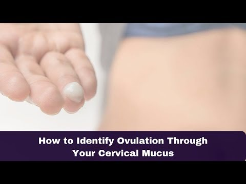 How to Identify Ovulation Through Your Cervical Mucus
