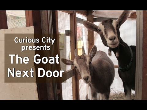 What Are The Limits On Backyard Livestock In Chicago?   WBEZ