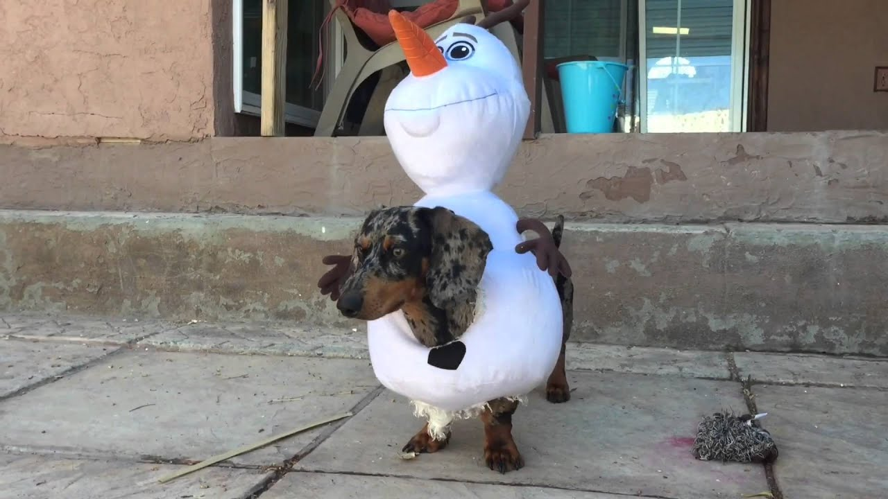 Funny Dog In Olaf Costume - YouTube
