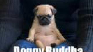 Very Funny Dogs thumbnail
