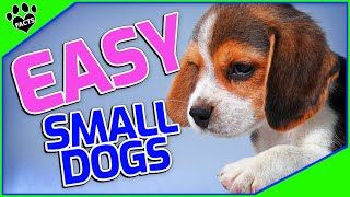Easy Small Dog Breeds Simple as ABC