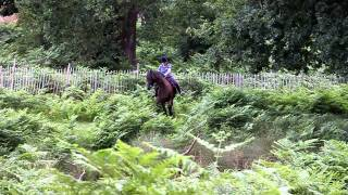 Angry Horse Rider Fails To Ride And Instead, Abuses Her Horse