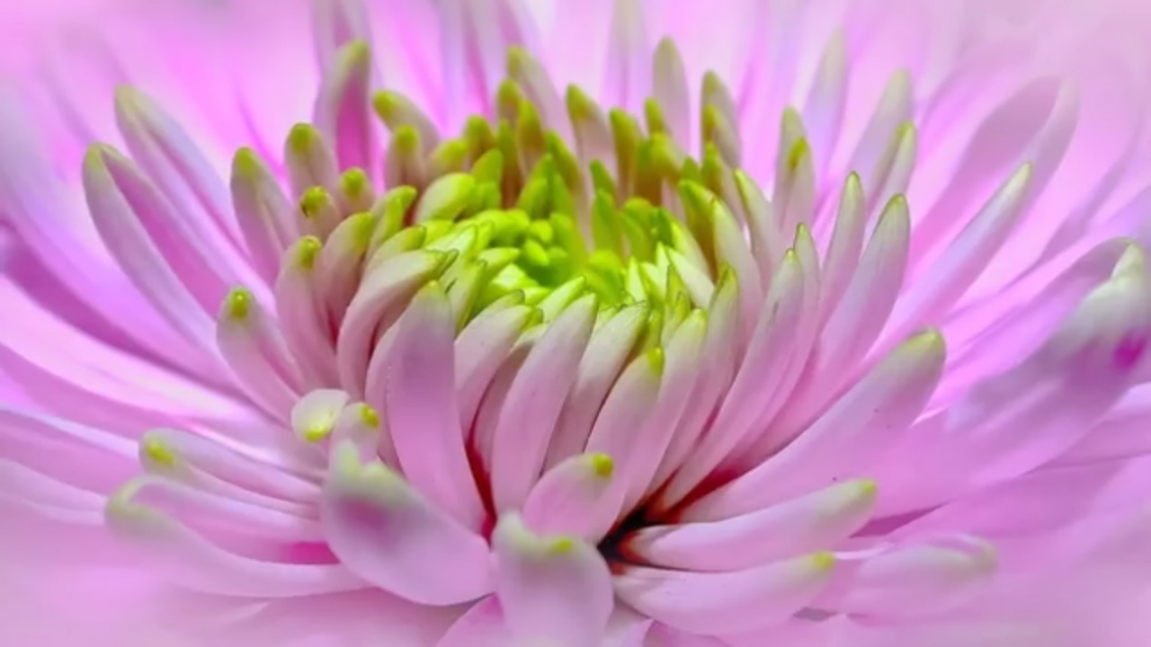 Top 10 List Of Most Beautiful Flowers On Planet Earth Youtube