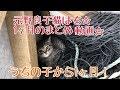 元野良子猫はち☆うちの子から1ヶ月!のまとめ♪【はちの成長記録#30】
