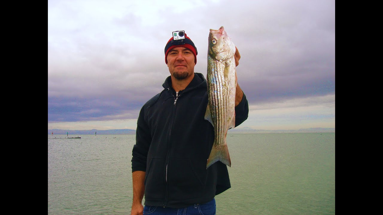 Striped Bass Fishing With Swim Baits From Shore In The