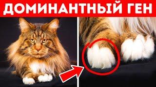 Почему у большинства кошек белые лапки и другие факты, которые помогут лучше их понять
