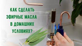 Как сделать эфирное масло в домашних условиях - дистилляция эфирного масла эвкалипта