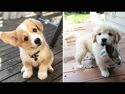 ♥Cute Puppies Doing Funny Things 2020♥ #10  Cutest Dogs