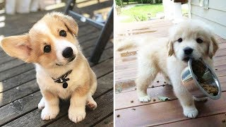 ♥Cute Puppies Doing Funny Things 2019♥ #10  Cutest Dogs