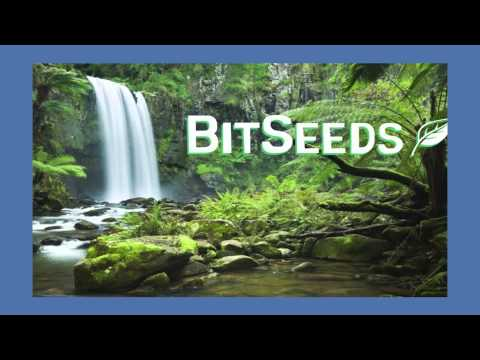 Announcing Bitseeds - the Rainforest Foundation's Environmen