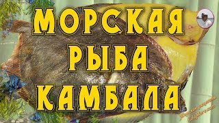 морская рыба. Рыба камбала видео от Petr de Crilon