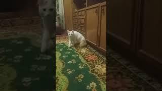 Крутое окончание видео