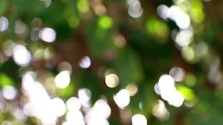 大地の種・循環#4(大地の種オリジナル曲:A Gift from the Forest)