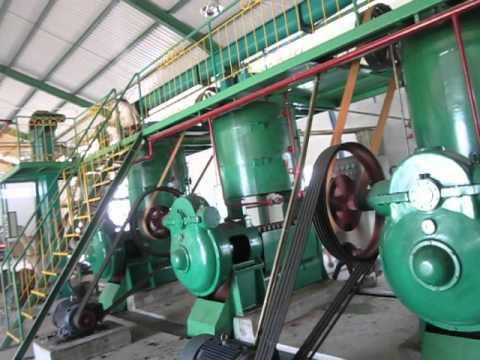 Jatropha Oil Production
