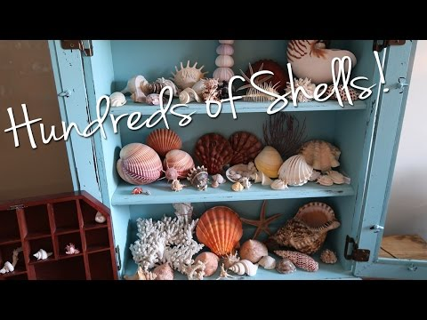 🐚 A Collection of HUNDREDS of Seashells!! 🐚