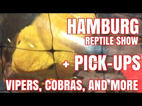 APRIL 2016 REPTILE EXPO (HAMBURG, PA) VIPERS, COBRAS, AND MORE