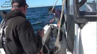 JIGNPOP & Black Hole USA: Black Hole Giant Stand Up Rod in Action (450lb Bluefin), Cape Cod 2012
