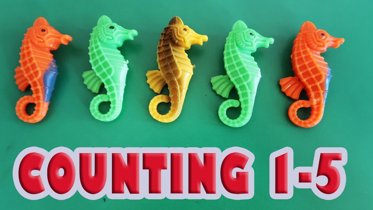 learn to count seahorses counting numbers 1 to 5 colorful seahorse