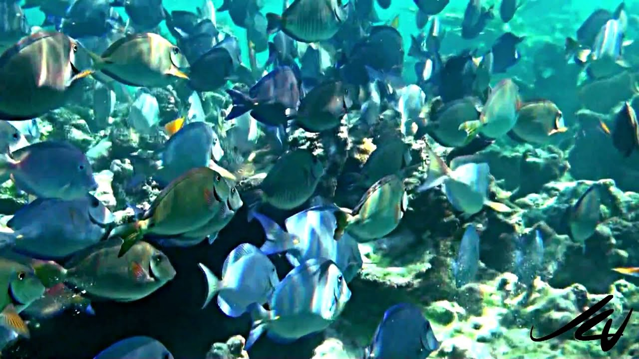 Colorful fish of a caribbean reef youtube for Caribbean reef fish