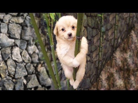 Cute is Not Enough - Funny Cats and Dogs Compilation #89