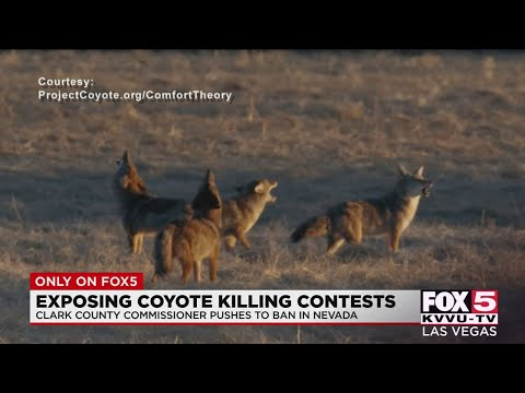 Competitive coyote hunts could be a thing of the past in Nevada