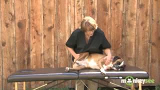 Массаж задней части тела собаки