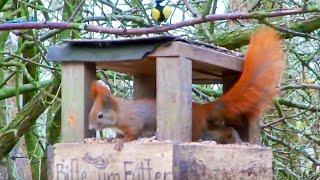Vogelhaus Im Wald Vögel Wood Birds Squirrel