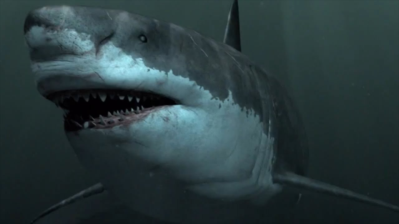 Megalodon Sightings: Is the Megalodon Shark Still Alive? | Exemplore