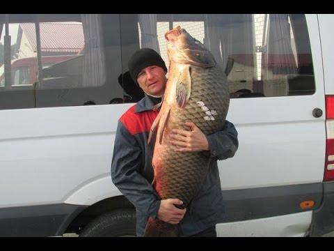 Ловить большую рыбу. Как правильно ловить большую рыбу