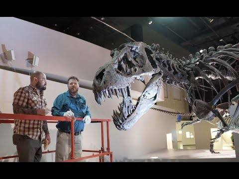 How Do We Clean The Dinosaurs At The Houston Museum Of Natural Science?