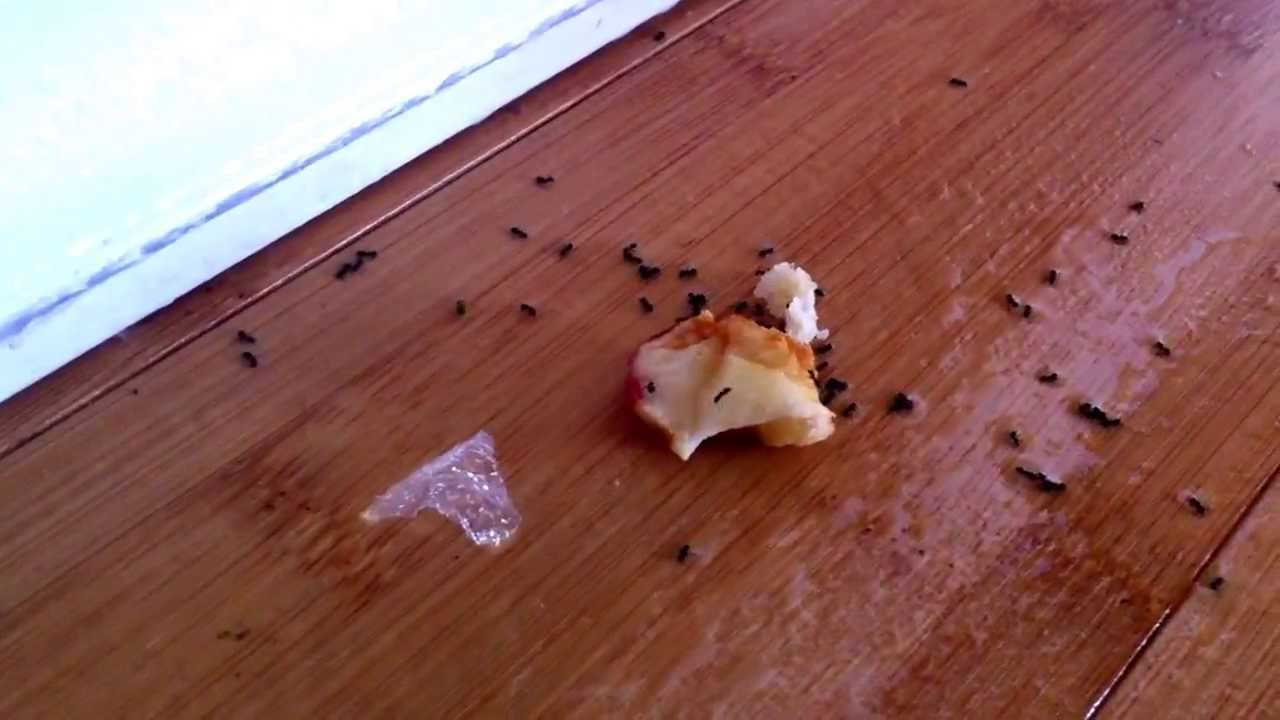 Does Vinegar Kill Ants? A Family Case Study and Funny Commentary ...