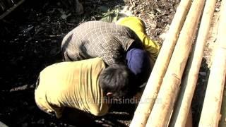Arunachali boy chases a pig at a farm for sacrifice : Man vs. wild?