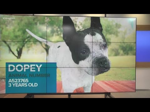 KHOU 11 teams up with Harris County Animal Shelter for pet adoptions