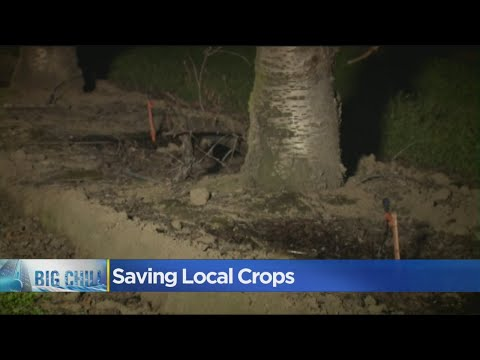 Farmers In The Sacramento Area Using Sprinklers To Keep Crops From Freezing