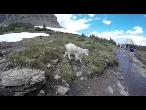 Lost Lake Mountain Goats | Glacier National Park | June 30, 2016