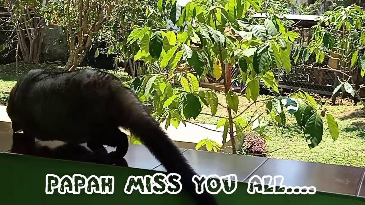 Wisata Kopi Luwak Puncak 1 Miss U All My Family