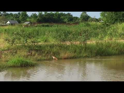 Swimming Dog | The real dog swam accross the canal! Aug 2018