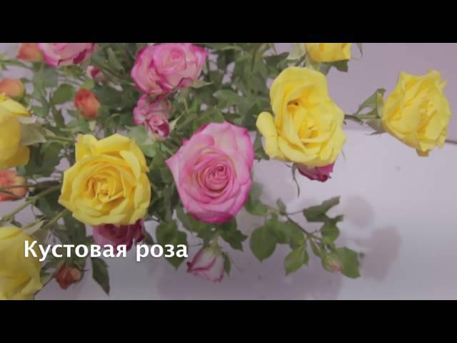 Закажите на весну 2018 года. Английские розы дэвида остина. Англия. Хорошо зимуют и обильно цветут в сложных климатических условиях. На зиму необходимо укрытие, обрезка кустов легкая, оздоравливающая. Саженцы в фирменных пакетах 1l с оригинальным логотипом питомника и цветной.