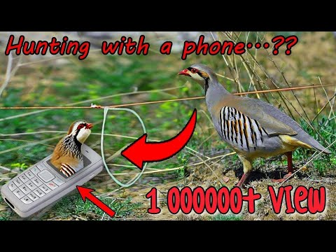Bird hunting | Smart Boy caught a bird with his phone 😱😱