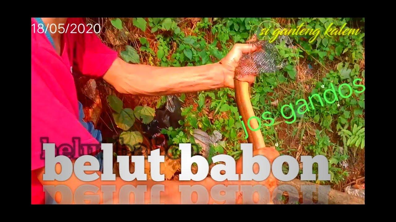 Mancing belut termantap (ngurek) spot belut di danau - YouTube