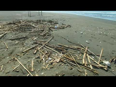 台南的危險沙灘 埋在沙灘裡會刺人的竹子 20181103