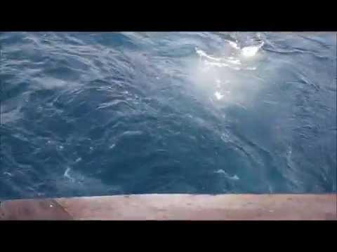 Offshore Tuna Fishing