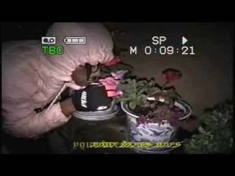 ♡♡ TRACY GREY - LIFE OF A POPSTAR ♡♡ (PROD LIL TRACY HORSEHEAD)